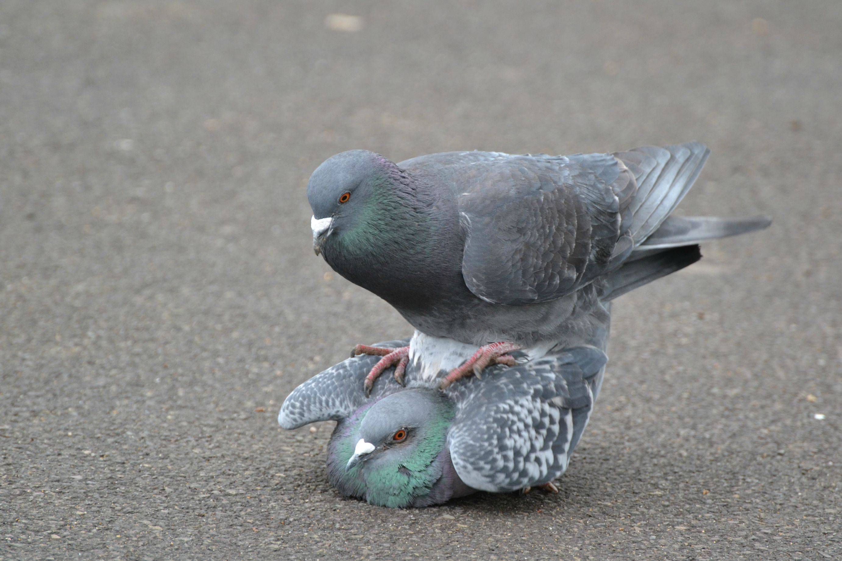 Google Places Pigeon Update